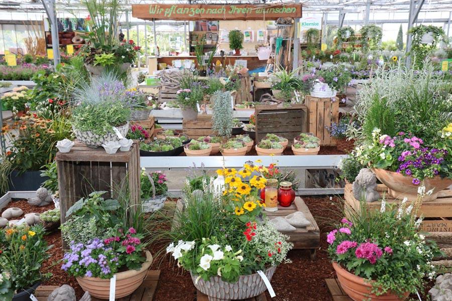 Topfpflanzen Blumen Klemke Soest
