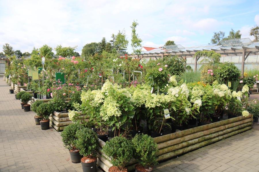 Pflanzen Blumen Klemke Soest