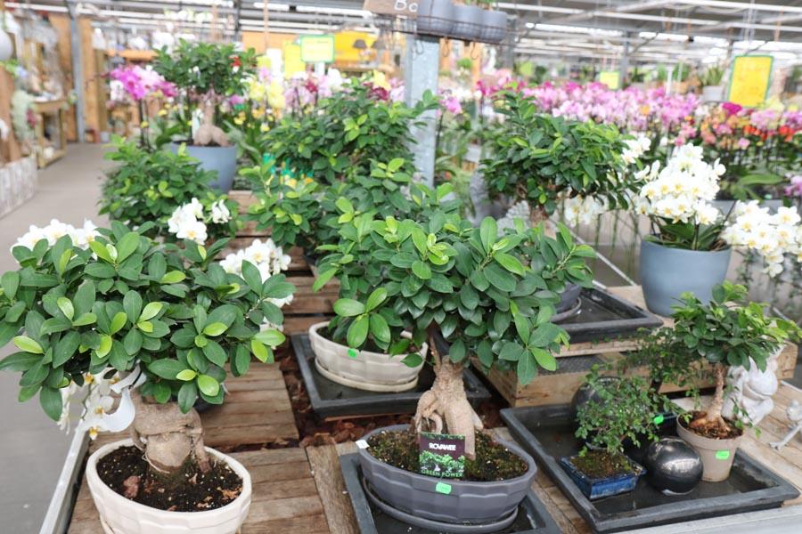 Zimmerpflanzen Klemke Werl