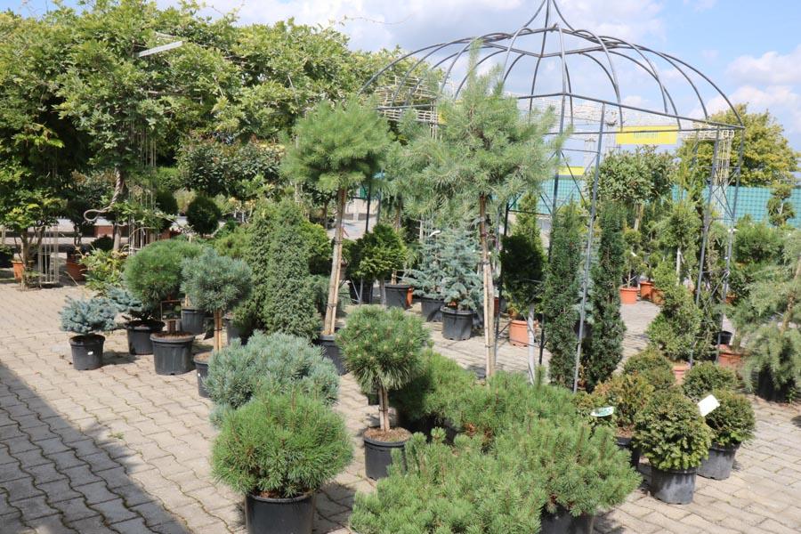 Gartenbepflanzung Gartencenter Klemke Werl
